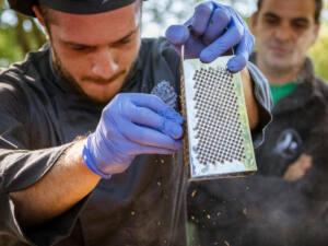 Caçar trufas negras na Grécia