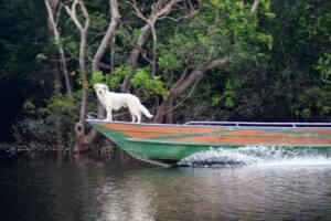 Hotel de selva na Amazônia
