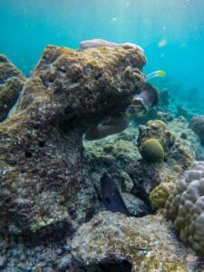 Snorkel Ilha local Maldivas - Dharavandhoo - Baa Atoll